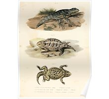 Joseph Fitzinger 1867 0043 Picture Atlas for popular scientific natural history of vertebrates Poster