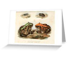 Joseph Fitzinger 1867 0195 Picture Atlas for popular scientific natural history of vertebrates Greeting Card