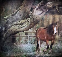 ~ Big Red ~ by Lynda Heins