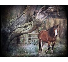 ~ Big Red ~ Photographic Print