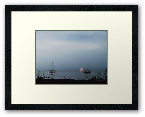 Misty Blue by Gail Bridger