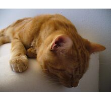 Ginger Photographic Print