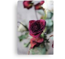 Wilted Petal Canvas Print