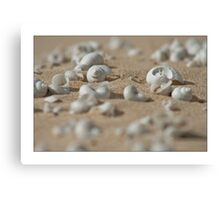 Dune Jewels Canvas Print