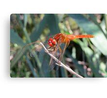 Edited orange dragonfly Canvas Print