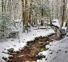 The Winter Stream -One Year On by VoluntaryRanger