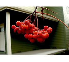 Red Berries  and Green House Photographic Print