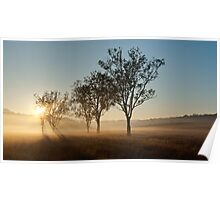 Fog Rays Through the Trees Poster