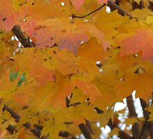 I'm Still Falling for Fall by Rusty Gentry
