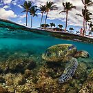 hawaiian green sea turtle swimming HDR by Flux Photography
