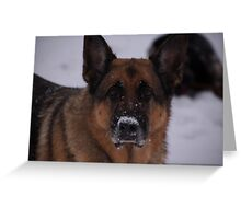 snow !!!! what snow ???? Greeting Card