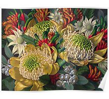 White Waratahs, Flannel Flowers and Kangaroo Paws Poster