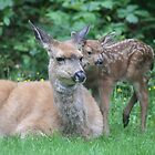 Deer in our garden by lenslife