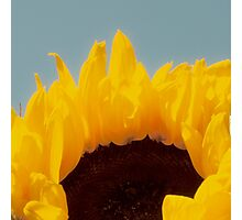 hello sunflower Photographic Print