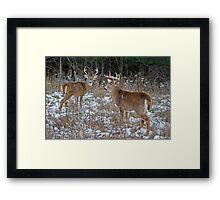 Two Bucks worth Framed Print
