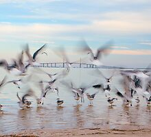 Chasing Birds by Beth Mason
