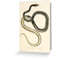 Joseph Fitzinger 1867 0121 Picture Atlas for popular scientific natural history of vertebrates Greeting Card