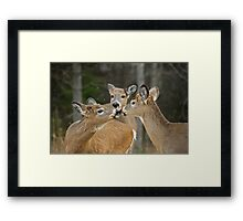 A Family Moment Framed Print