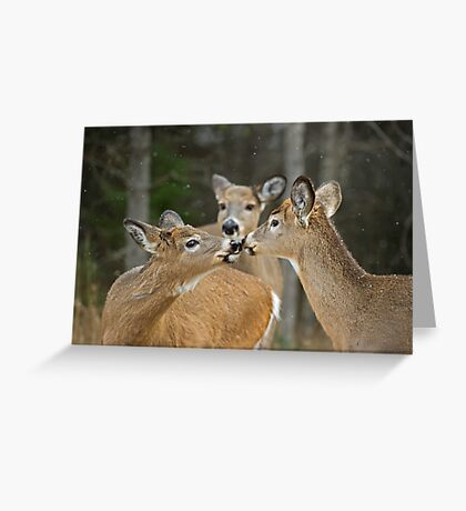 A Family Moment Greeting Card