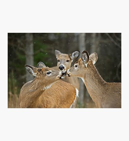 A Family Moment Photographic Print
