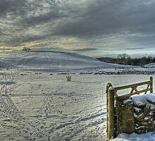 The Field In Winter by Jamie  Green