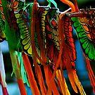 Kites..shall we? by Kornrawiee