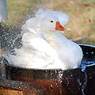 Bath Time by Steven Squizzero