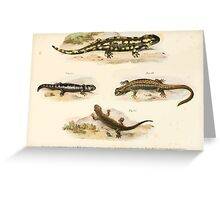 Joseph Fitzinger 1867 0211 Picture Atlas for popular scientific natural history of vertebrates Greeting Card