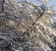 White Fur Coat by TrixiJahn