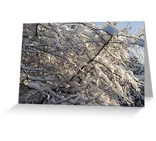 White Fur Coat Greeting Card