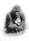 Mr. Gorilla by CarolM
