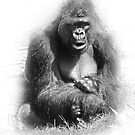 Mr. Gorilla by CarolM