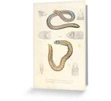 Joseph Fitzinger 1867 0079 Picture Atlas for popular scientific natural history of vertebrates Greeting Card