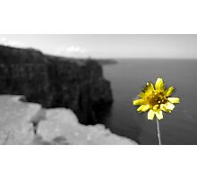 Cliffs of Moher Flower Photographic Print