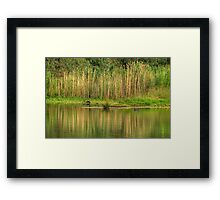 In A Rush - Wonga Wetlands, Albury NSW - The HDR Experience Framed Print