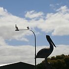 Pelicans waiting for the catch,American River,S.A. by elphonline