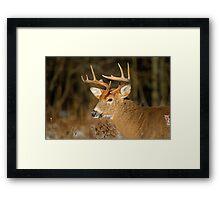 Profile of a Buck  Framed Print