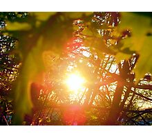 Sunset through the leaves Photographic Print