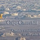 Cape Churchill - Ice and Polar Bears by Owed To Nature
