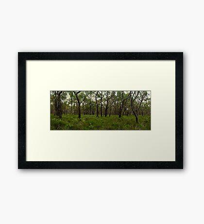 Anglesea Heathland Framed Print