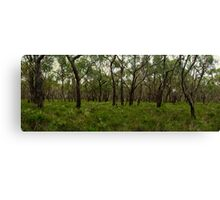 Anglesea Heathland Canvas Print