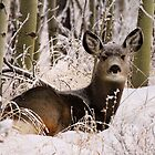 A Living Wilderness: Canadian Wildlife by EchoNorth