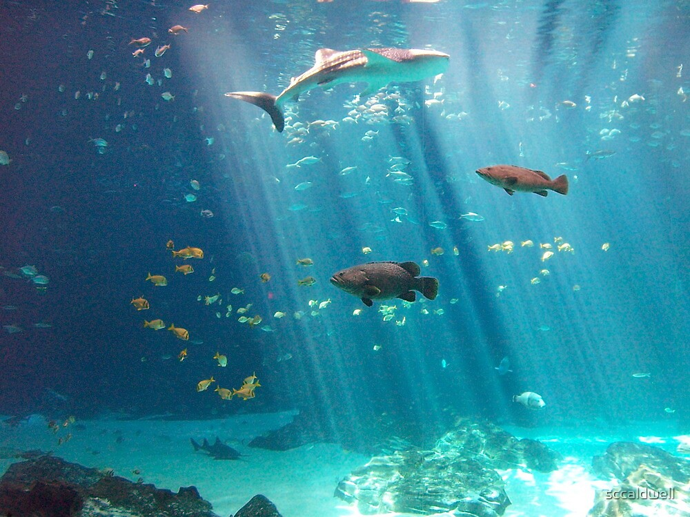 """Whale Shark - Georgia Aquarium, Atlanta, Georgia"" by ..."