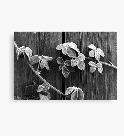 Frost & Thorns Canvas Print