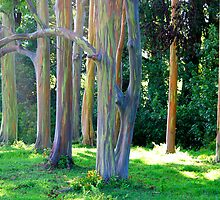 Rainbow Trees of Maui by Angelina Hills