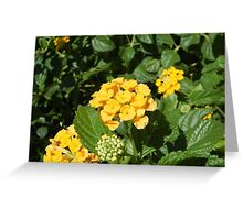 Yellow Cluster Greeting Card