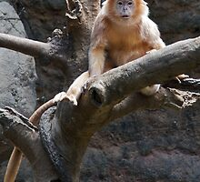 Furry Lutung by cute-wildlife