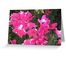 Pink Peace Greeting Card