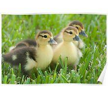 """The Three Little Ducks"" Poster"
