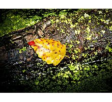 Autumn is Near  Photographic Print